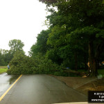 tree down image